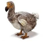 dodo_11
